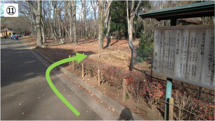 代々木公園クロカン11