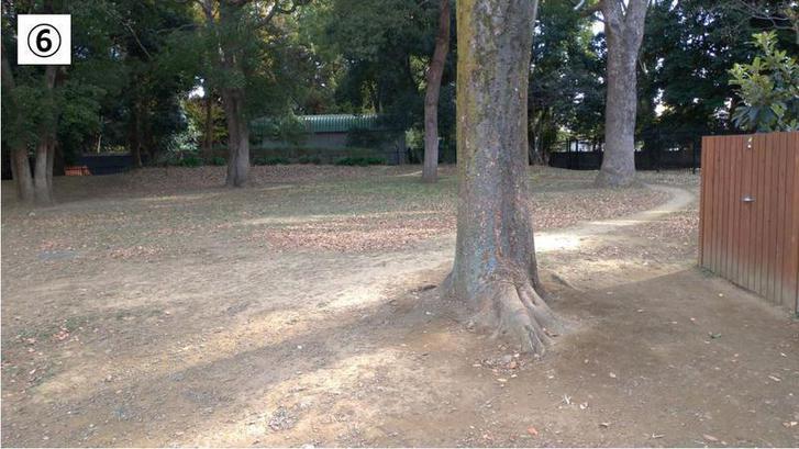 代々木公園クロカン6