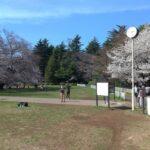 【写真15枚】砧公園クロカンコースを詳しく解説!